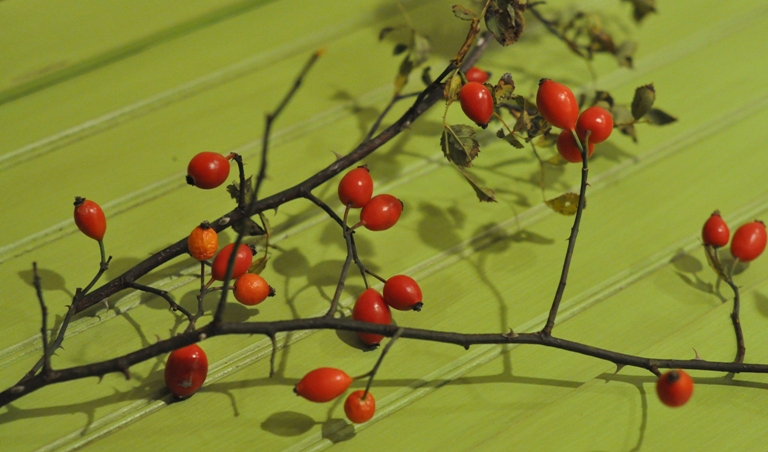 Rose hips recipes